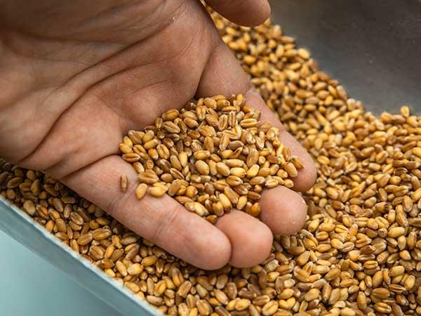 Produzione-di-farina-per-dolci-e-pane-modena